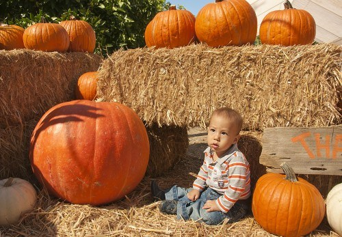 On a sunny Saturday, Wendy Tung from La Verne and her 11 month old son, Hans Tung, visited the pumpkin patch for the first time. While enjoying the event, Hans Tung posed on the hay while his mother took pictures. The 21st Annual Harvest Pumpkin Patch at Heritage Park, is open from 4 p.m. to 7 p.m. weekdays and from 10 a.m. to 7 p.m. weekends. / photo by Denisse Leung