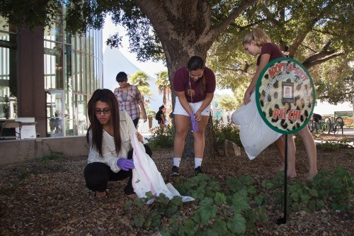 """Nikita Lalla, Jacky Duran, Grace Futch and Erica Castellanos of Psi Chi pick up trash out of the tree duff in front of the Campus Center on Nov. 5. Psi Chi is one of the clubs participating in the """"Adopt-A-Spot"""" program sponsored by Associated Student of the University of La Verne to help keep the campus clean. Each club has a sign in front of their location around campus to designate their spot. The competition will continue until the winner is announced Dec. 11. Judged by ASULV, the club that keeps its spot the cleanest will receive $250. / photo by Pablo Cabrera"""