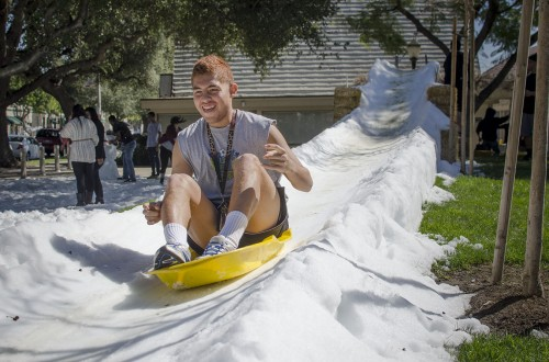 Senior business management major Fernando Almejo sleds down a snow hill in Sneaky Park Tuesday while trying to avoid the snowballs being hurled at him by fellow students on the way down. It was a balmy 69 degrees for the snow day, which was brought to campus as part of an event organized by the Campus Activities Board. / photo by Mitchell Aleman