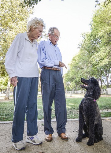 Morelli, 4, was formerly named Cupcake. His owners wanted a female but discovered male dogs were friendlier. He has visited the Claremont Pooch Park for nearly three years. His owners, Cherie and Alan Carlisle are residents of the Mt. San Antonio Gardens in Pomona. / photo by Uyen Bui