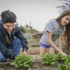 Freshman Edwin Escobar and senior Michelle Bedolla tend to the parsley grown in the Peace and Carrots Community Garden Tuesday afternoon. The garden is located at the north end of the La Verne Church of the Brethren parking lot, off of Fifth Street./ photo by Uyen Bui