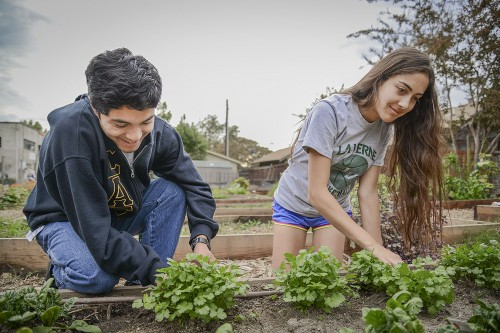 Freshman Edwin Escobar and senior Michelle Bedolla tend to the parsley grown in the Peace and Carrots Community Garden Tuesday afternoon. The garden is located at the north end of the La Verne Church of the Brethren parking lot, off of Fifth Street. / photo by Uyen Bui