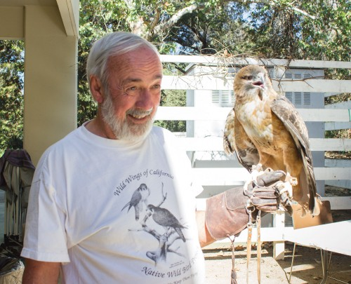 Bob Everett, a volunteer from the Wild Wings of California, engages his audience by playing with a Red-Tailed Hawk at the 10th annual Family Bird Festival at the Rancho Santa Ana Botanic Garden. Everett teased the hawk to encourage it to display its wings and red tail feathers. The festival featured a variety of stations with volunteers offering information and special activities. / photo by Celene Vargas