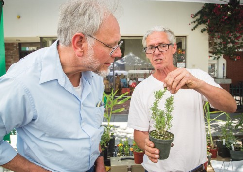 Jay Jones, professor of biology, and Tom Yost, owner of Carol Gardens, an organic growing business, discuss the aromas of rosemary Saturday at the La Verne Farmers Market. They tasted the rosemary after a lively conversation over the asexual reproduction of a circular cup structure, which develops new individuals when splashed out by rain or flowing water. Yost started growing vegetables and herbs at the age of 12 and has been running Carol Gardens in Riverside for seven years. / photo by Jerri White
