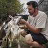 Gary Mitchell feeds his goats Gaia and Calliope carrots, one of their favorite vegetables, at Planet Rehab in San Dimas. Mitchell started the sanctuary in 2002, in hopes of educating people about how the environment is affecting the animals. Mitchell now has over 350 different animals in his backyard, including ducks from China to birds from Australia. /photo by Jolene Nacapuy