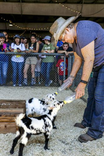Carol Ennis, fairplex employee and baby animal caretaker for the past five years, feeds a pair of 2-week-old goats Monday. She and her co-worker Val Shacklet had to add powdered milk to the feeding solution for the goats because their mother does not produce enough to feed all three of her babies. Goats typically do not have triplets, because they generally can only hold enough milk to support twins. Visitors can see these animals in the Big Red Barn. / photo by Kaitlin Pyne