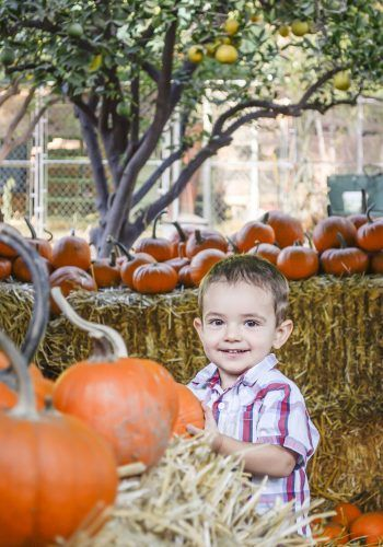 "Hidden among the rows of hay bales in Heritage Park, 1-year-old Ethan Wagner from La Verne is on the hunt to see how many pumpkins he can successfully pick up and show his parents. His older brother and sister try to help him pick an ""Ethan-sized"" pumpkin. The Heritage Park Pumpkin Patch is located at 5001 Via De Mansion in La Verne. It will be open weekends from 10 a.m. to 8 p.m. and weekdays from 4 p.m. to 8 p.m. through Oct. 30. / photo by Audrey Gaudette"