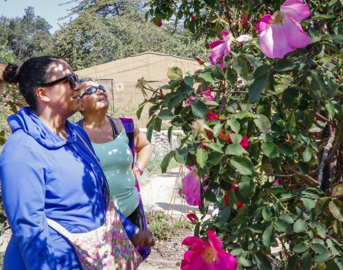 Tasha Diaz and her mother Carmen Ferrell admire the California native roses during the Wildflower Walk in the Rancho Santa Ana Botanic Garden in Claremont, Saturday April 7. Ferrell lives in Claremont and was not aware of the garden until her daughter found the event online. Ferrell says now that she has visited the garden, she will return at some point. / photo by Katie Pyne