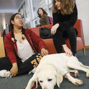 Abby, a 10-year-old yellow lab from Paws to Share, relaxes while getting scratched by Samantha Liu, freshman psychology and child development major, and McKenna Mobley, sophomore psychology major, Monday in Wilson Library. Pet handler Elizabeth Mastro, who has worked with Paws to Share since February, said she adopted Abby five years ago. Therapy dogs visited all week as part of the library's de-stress activities, and will return every day next week./ photo by Tyler Evains