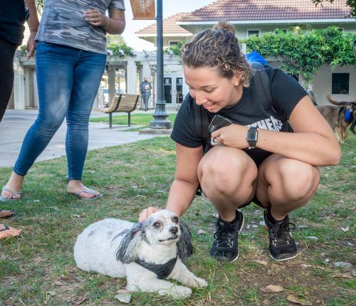 Freshman biology major Alicia Thompson unwinds after a hard swim practice with Crackers the therapy dog Sept. 25 in Sneaky Park. Therapy dogs are brought to campus by the Residence Hall Association throughout the semester to help students battle the stresses of college life. / photo by Veronyca Norcia