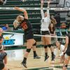 La Verne junior setter Madison Maynes jumps to block a spike attempt from Occidental middle blocker Lauren Duffy on Saturday. The Leopards beat the Tigers, 3-0, for their 16th win of the season. The Leopards will host Chapman in their last home game at 7 p.m. Friday at Frantz Athletic Court and finish the season on the road at Pomona-Pitzer at 4 p.m. Saturday.