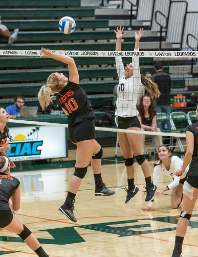 La Verne junior setter Madison Maynes jumps to block a spike attempt from Occidental middle blocker Lauren Duffy on Saturday. The Leopards beat the Tigers, 3-0, for their 16th win of the season. The Leopards will host Chapman in their last home game at 7 p.m. Friday at Frantz Athletic Court and finish the season on the road at Pomona-Pitzer at 4 p.m. Saturday. / photo by Ariel Torres