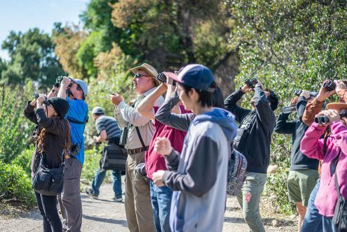Ed Babcock, Pomona Valley Audubon Society member, leads a group of bird watchers through the Rancho Santa Ana Botanical Garden on Sunday. This free family bird walk gave people a chance to enjoy nature while looking for different types of migrating birds.