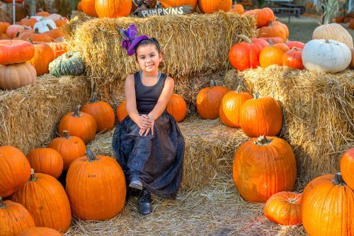 Avery Perez, 7, went on Tuesday to the annual Heritage Harvest Pumpkin Patch in Heritage Park at 5001 Vía De Mansion in La Verne, where people can buy pumpkins, stop by the petting zoo or take a hay ride. The event is open through Oct. 30. / photo by Veronyca Norcia