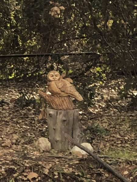 """The """"Watching You"""" sculpture by Kim Lingo depicts a watchful owl on a tree stump and is painted to resemble the tree stump it is displayed upon at the California Botanic Garden. / photo by Sarah Van Buskirk"""